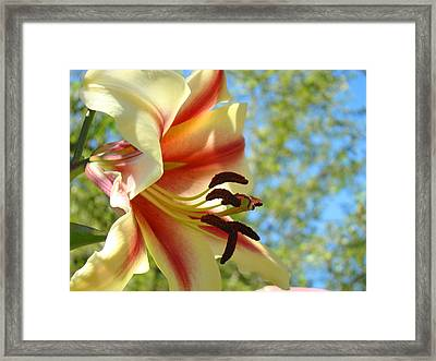 Big Lily Flowers Art Prints Summer Garden Lilies Framed Print by Baslee Troutman