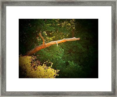 Big Log Framed Print by Joyce Kimble Smith