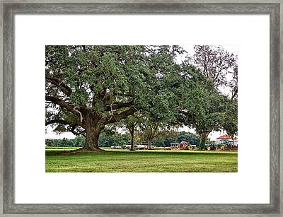 Big Oak And The Tractors Framed Print by Michael Thomas