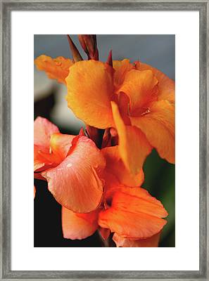 Big Orange Flower Framed Print