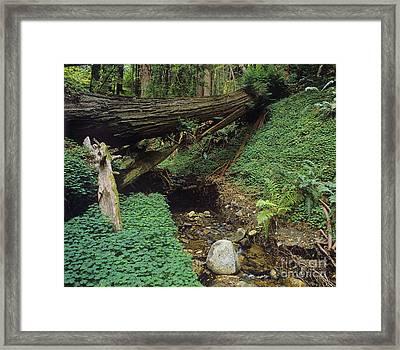 Big-sur-t10-5 Framed Print by Craig Lovell