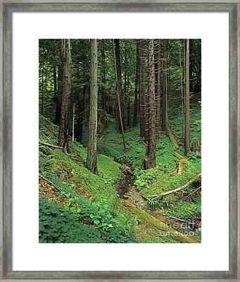 Big-sur-t8-3 Framed Print