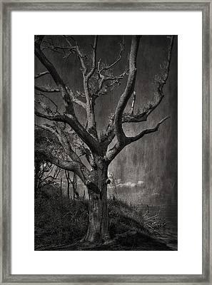 Big Talbot Island Framed Print