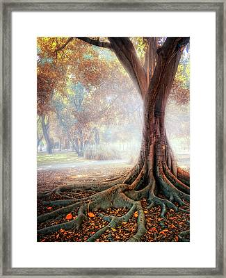 Big Tree Root Framed Print by Zu Sanchez Photography