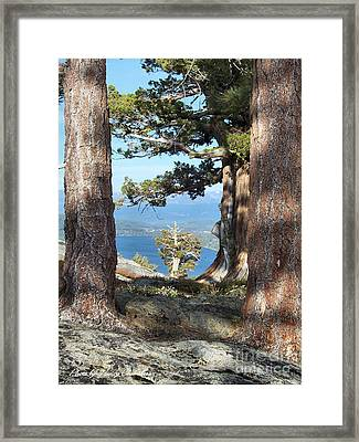 Big Trees Little Tree Framed Print