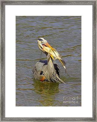 Bigger Fish To Fry Framed Print by Robert Frederick