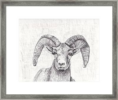Bighorn Sheep Framed Print by Nicole Grattan