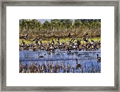 Billabong V10 Framed Print by Douglas Barnard