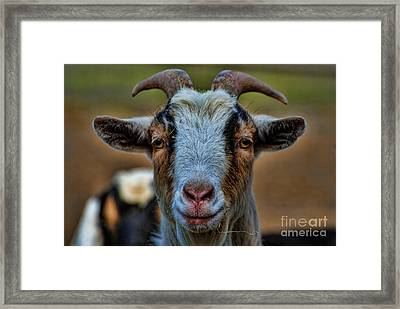 Billy Goat Framed Print by Paul Ward