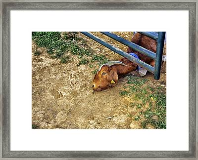 Billy's Escape Framed Print