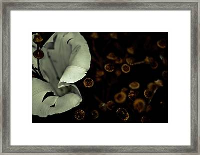 Bindweed And Seeds Framed Print by Grebo Gray