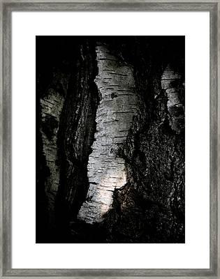 Birch Abstraction Framed Print by Odd Jeppesen