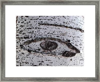 Birch Bark All-seeing Eye Framed Print by Janeen Wassink Searles