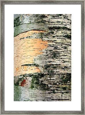 Birch Bark Framed Print by Kathy Peltomaa Lewis