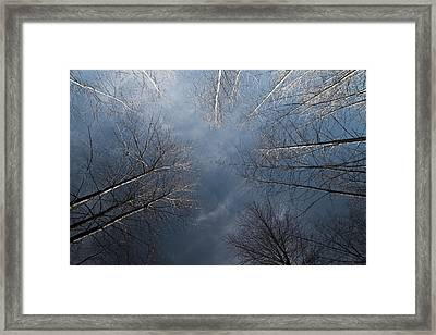 Birch Framed Print by James Ingham