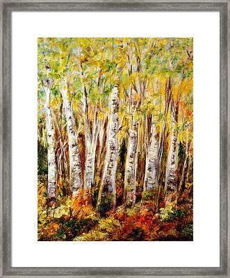 Birch Tree In Sunshine Framed Print