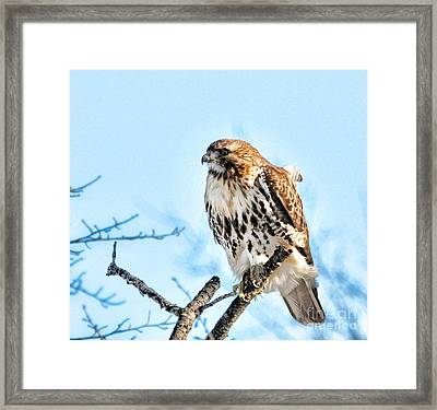 Bird - Red Tail Hawk - Endangered Animal Framed Print by Paul Ward