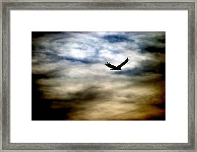 Bird 73 Framed Print by Natasha Bishop