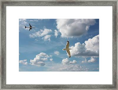 Bird And Flight Agaisnt Sky Framed Print