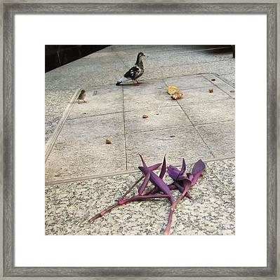 Bird And Flowers Framed Print by Todd Sherlock