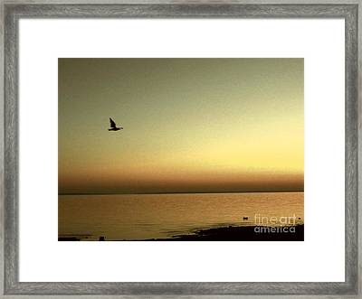 Bird At Sunrise - Sepia Framed Print