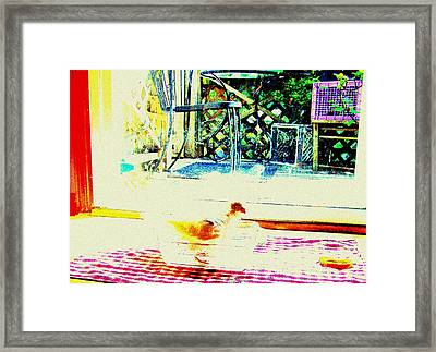 Bird Bath Framed Print by YoMamaBird Rhonda