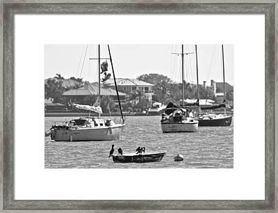 Bird Boat Framed Print by Betsy Knapp