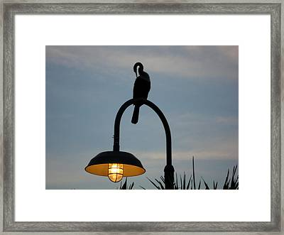 Bird Drying Out Framed Print by Val Oconnor