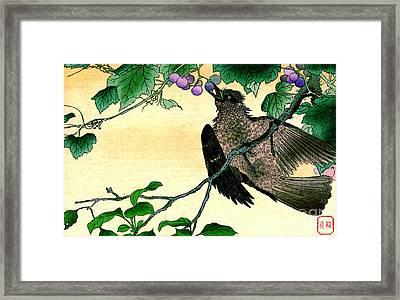 Bird Eating Grapes 1900 Framed Print
