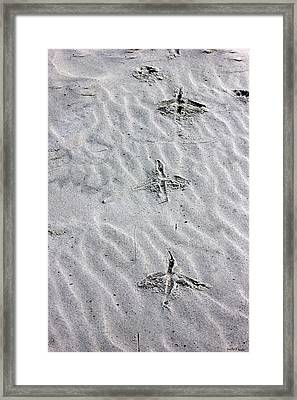 Bird Foot Prints Framed Print