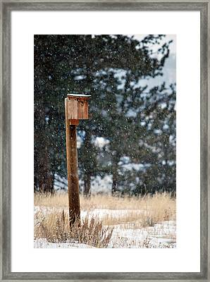 Bird Home Framed Print