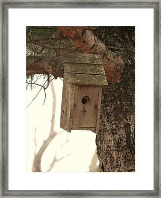 Bird House Framed Print by Rebecca Overton