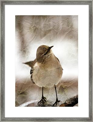 Bird In A Bag Framed Print by Skip Willits