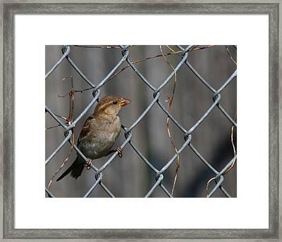 Bird In A Wire Framed Print by Joe Wicks