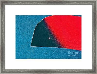 Bird In Flight Framed Print by Joan McArthur
