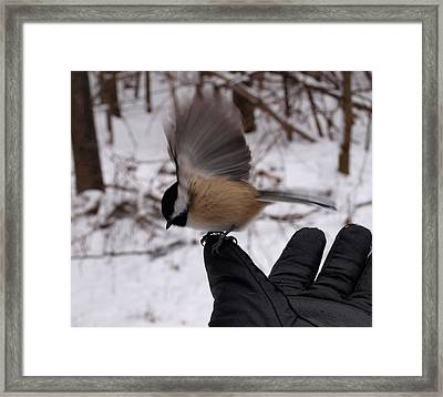 Bird In The Hand Framed Print by Joshua House