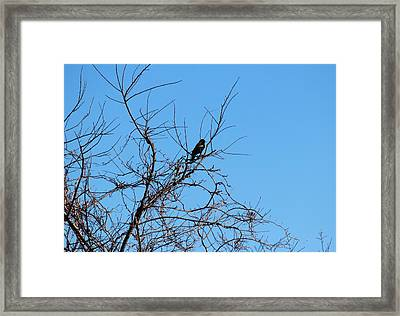Bird In Tree Framed Print