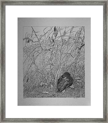 Bird In Winter Framed Print by Daniel Reed