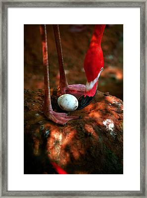 Framed Print featuring the photograph Bird Is The Word by Lon Casler Bixby
