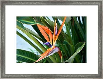Bird Framed Print by Joseph Yarbrough