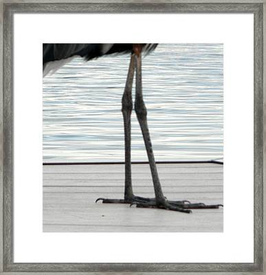 Bird Legs Framed Print by Christy Usilton
