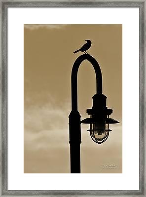 Bird Light Framed Print