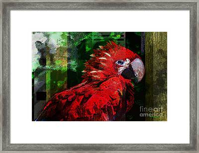 Bird Of Exotic Color Framed Print by Christine Mayfield