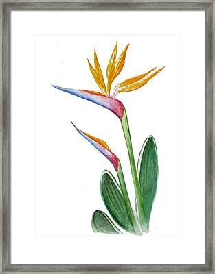 Bird Of Paradise Card Framed Print