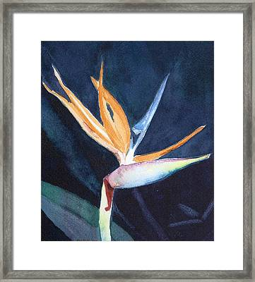 Bird Of Paradise Framed Print by Charlotte Hickcox