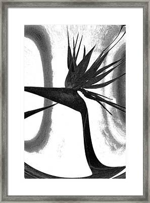 Bird Of Paradise Framed Print by Elizabeth  Doran