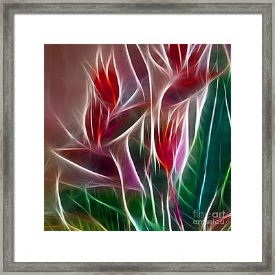 Bird Of Paradise Fractal Panel 2 Framed Print