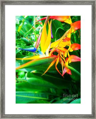 Bird Of Paradise Framed Print by Sacred  Muse