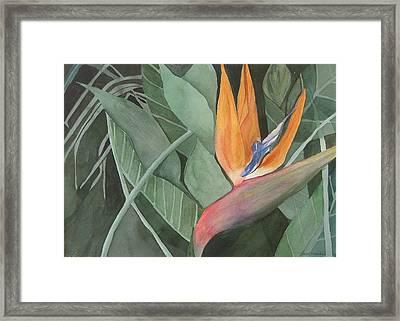 Bird Of Paradise Framed Print by Heidi Patricio-Nadon