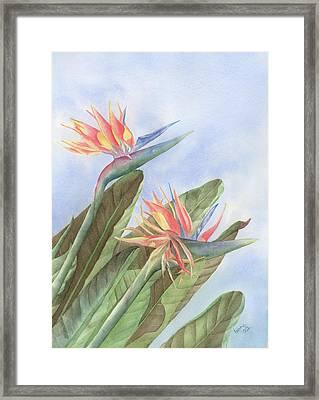 Bird Of Paradise Framed Print by Leona Jones